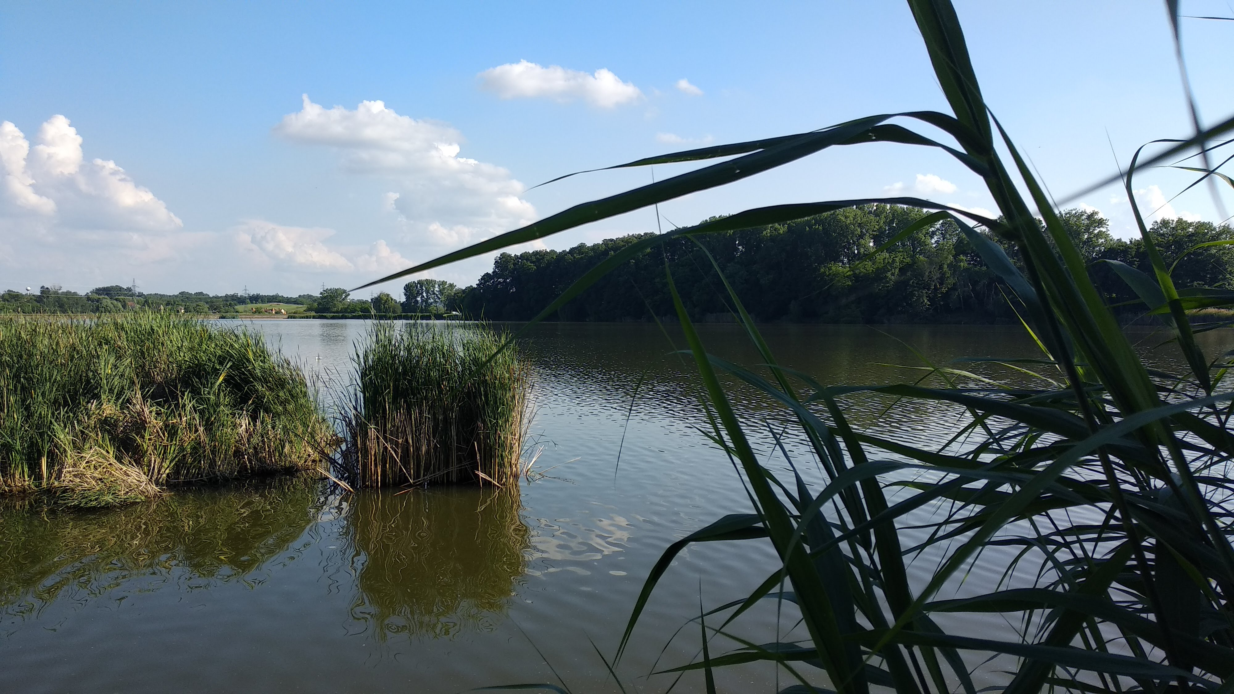 Deseda-tó